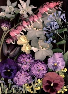 Craig Cramer, Bloom Day Scans