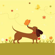 Happy Dachshund dog playing with butterfly.