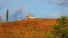 Couleurs d'automne en vallée du Lot https://photos.thierry-dollon.net?utm_content=buffer36f90&utm_medium=social&utm_source=pinterest.com&utm_campaign=buffer #followme #thierrydollon #photodujour #lot #sudouest #cahors