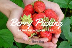 Berry Picking in the Milwaukee Area