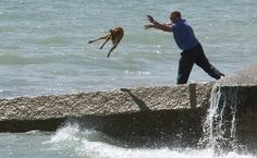 Image detail for -with animal data shows animal abuse dogs less fortunate than