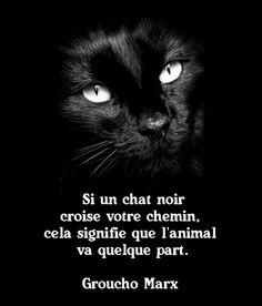 Si un chat noir croise votre chemin, cela signifie que l'animal va quelque part. Groucho Marx