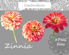 Hydrangea Clipart Blossom Clipart Flower Clipart by CamDoodleArt