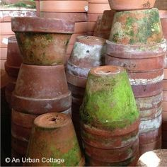 Clay pots with moss.  I love these for summer or indoor gardening.