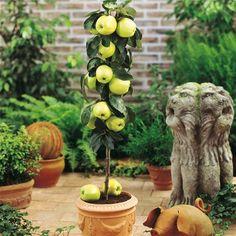 Exemplo de frutífera em vaso