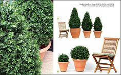 artificial topiary - Google Search