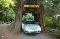 Drive Through a Redwood, Ave. of Giants/Garberville, Humboldt County, California. Add that to your bucket-list www.mybucketlistonline.com