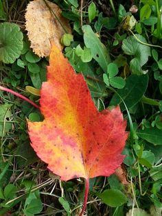 'fall by cindylavigne Fall 2016, Plant Leaves, Community, World, Plants, Photos, Inspiration, Image, Biblical Inspiration