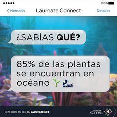 ¿Has tenido la oportunidad de hacer #snorkel o buceo y conocer algunas de estas #plantas? #Biologia #Laureate