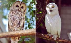 Owls at the Mini Zoo / http://sheepy.me/u/FBob