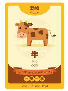 牛 COW