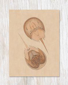 Vintage Horseshoe Crab Illustration Greeting Card