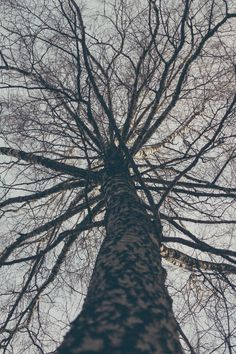 Low Angle View of Bare Tree Against Sky · Free Stock Photo Wallpaper Pictures, Nature Wallpaper, Cool Wallpaper, Mobile Wallpaper, Free Stock Photos, Free Photos, Bare Tree, Wallpaper Downloads, Aerial View
