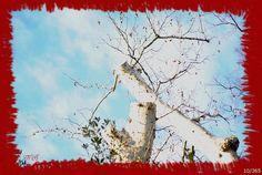 #10/366 -     Camminare a piedi per il Parco, osservando e guardandomi intorno. Due alberi sembrano quasi rincorrersi ed abbracciarsi... come una storia che nasce...