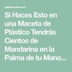 Si Haces Esto en una Maceta de Plástico Tendrás Cientos de Mandarina en la Palma de tu Mano – Salud Naturales