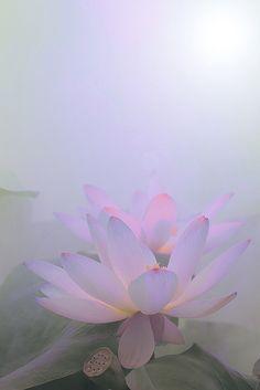 Lotus Flower Surreal Series by Bahman Farzad, via Flickr