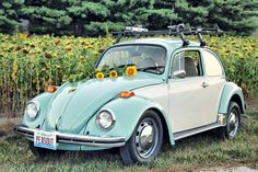 You find me one, Dragon. The car and the flower!