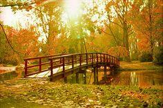 A forest bridge - Nitra SK - Garden Bridge, Old World, Places To Go, Scenery, Journey, Outdoor Structures, Bridges, City, Nikon