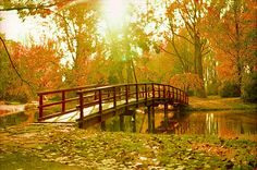 A forest bridge - Nitra SK - by Ferod', via Flickr