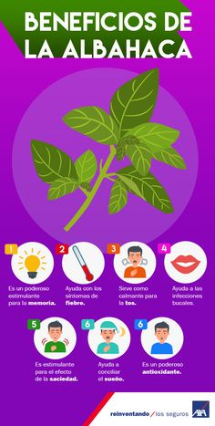 ¿Sabías que la #albahaca, es un miembro de la familia de la menta y es considerada por culturas mexicanas como planta medicinal? #planta #medicinal #hierva #salud #cuídate