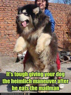 My Nakoda.  I just had to share this...I'm still laughing!  I simply LOVE enormous dogs! :)