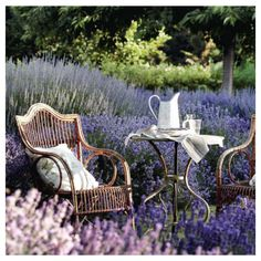 We love this lavender packed garden! What new plants are you planning to add to your garden in 2018? Check out this list of some of our butterfly garden favorites!