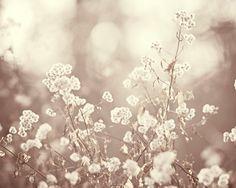 "Neutral Wall Art - beige nature photography light brown cream botanical prints fine art photo rustic - 16x20, 11x14, 8x10 Photograph, ""Lace"""