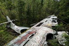 How to Hike to the Crashed Bomber Plane in Tofino, BC – Let's Go Left Tofino Bc, Bomber Plane, Vancouver Island, Canada Travel, Summer Travel, British Columbia, Where To Go, Beautiful Places, Places To Visit