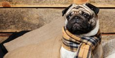 The best tips for giving your pets exceptional care - on a budget!