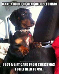 Going yo Petsmart