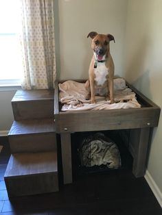 My very first real DIY project. A platform bed for the world's best dog!: woodworking