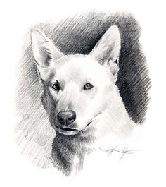 Weiße Schäferhund Hund Bleistift Zeichnung von k9artgallery auf Etsy