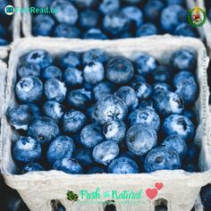 Did you know- there are many health benefits that you can receive from eating Blue Berries? #blueberry #blueberries #antioxidant #anthocyanin #phytonutrient Food Swap, Natural Health Remedies, Infused Water, Blue Berry Muffins, Detox Drinks, Fruits And Veggies, Superfoods, Health Benefits, Health Foods