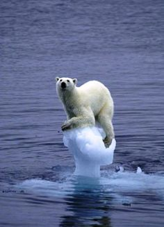 This is not funny . . . it is sad. What the hell are humans doing to this beautiful planet we share with so many other creatures like this poor polar bear? It stinks!