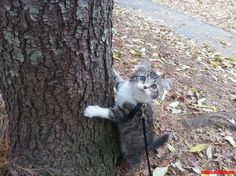 Little Marius Takes On The Great Outdoors - http://cutecatshq.com/cats/little-marius-takes-on-the-great-outdoors/