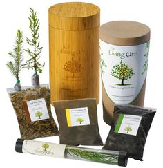 The Living Urn. Grow a tree from your ashes after cremation. Fantastic idea! I hope it's not for a very long time, but this is what I want to have when I die.