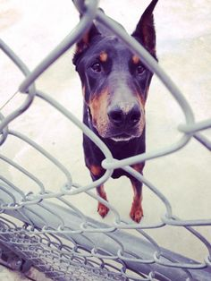 Buddy wants to play at SPCA Hamilton Dog Park - Hamilton, ON - Angus Off-Leash #dogs #puppies #cutedogs #dogparks #hamilton #ontario #angusoffleash