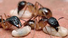 Najlepšie rady proti mravcom: Zbavte sa ich! - Pluska.sk Nordic Interior, Planting Seeds, Diy And Crafts, Insects, Flora, Gardening, Fruit, Vegetables, Plants
