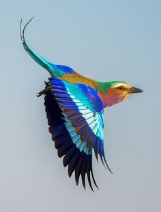 beautiful colorful bird flying PetEditor - Pet And Animal Photo Editor