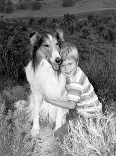 LASSIE, COLLIE  Lassie (1954–74)  It still makes me cry.