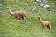 Estos dos animales ayudan a SANAR problemas emocionales: descubre cuáles son - IMujer