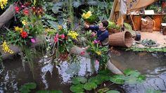 Un equipo de 20 horticultores tomó cuatro semanas para instalar más de 6.500 orquídeas híbridas en el invernadero Príncipe de Gales, en el Real Jardín Botánico de Kew, para el Festival anual de la Orquídea.