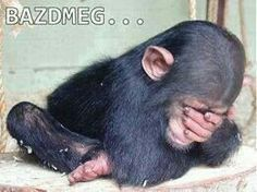 The Baby Chimpanzee by Schrödinger's Cat, via Flick Primates, Cute Baby Animals, Animals And Pets, Funny Animals, Baby Chimpanzee, Monkey See Monkey Do, Elephant Love, Tier Fotos, Funny Animal Pictures