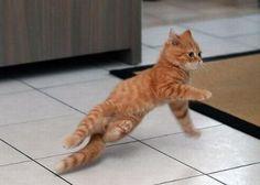 Zalig, een kat die kan breakdancen? Ja hoor!   newsmonkey