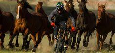 Alp-Con CinemaTour 2015 - News 1 #AlpCon #Mountainbike #Freeride #unReal #AnthillFilms #TGR #SherpasCinema #DannyMcAskill Snowboard, Sport, Horses, News, Animals, Movie, Animales, Animaux, Horse