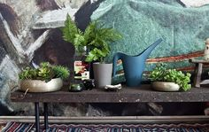 Create pockets of green to bring the outdoors in. Succulents