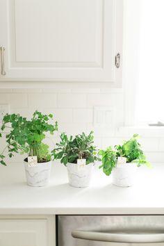 DIY mini-herb garden  Photography: Ruth Eileen - rutheileenphotography.com  Read More: http://www.stylemepretty.com/living/2014/03/11/tips-on-starting-an-indoor-herb-garden/