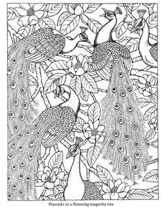dover coloring book naturescapes - Google Search