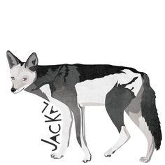 J is for Jackal #animalart