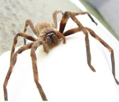 Deadly Bugs And Weird Creepy Crawlies That Could Be Inside Your ...